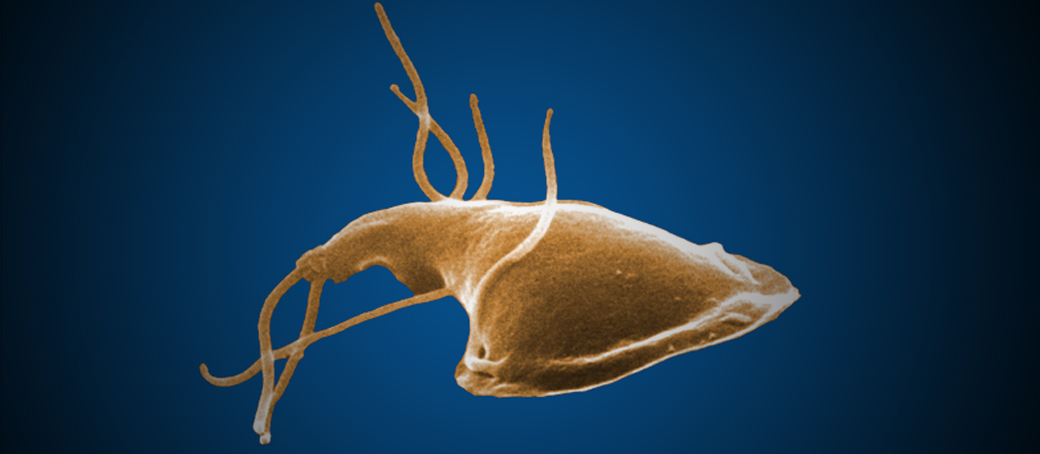 medicamente pentru paraziti la fiere