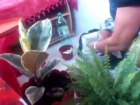Daunatorii florilor si tratamentele fara pesticid chimic