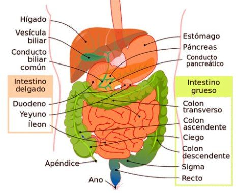 Cancer colon higado, Cancer de colon higado
