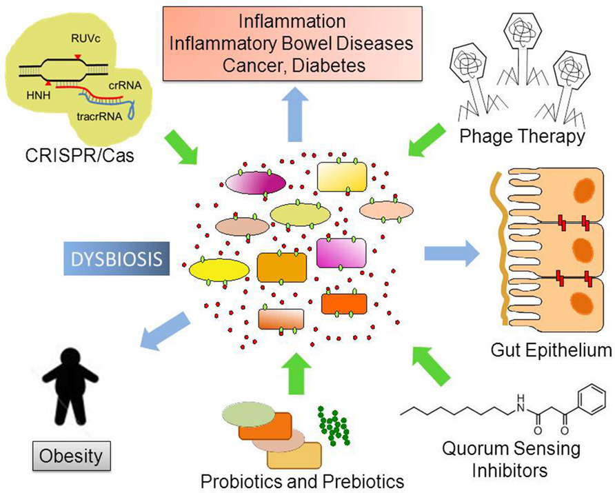 Diabetes type 2 dysbiosis, Published by Dysbiosis obesity