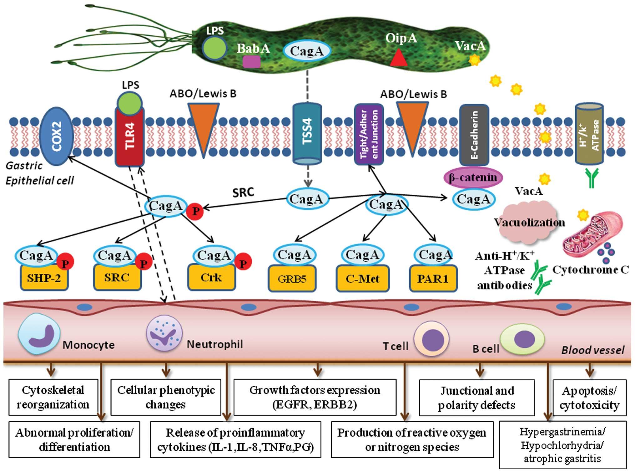 Actualități în tratamentul infecției cu Helicobacter pylori