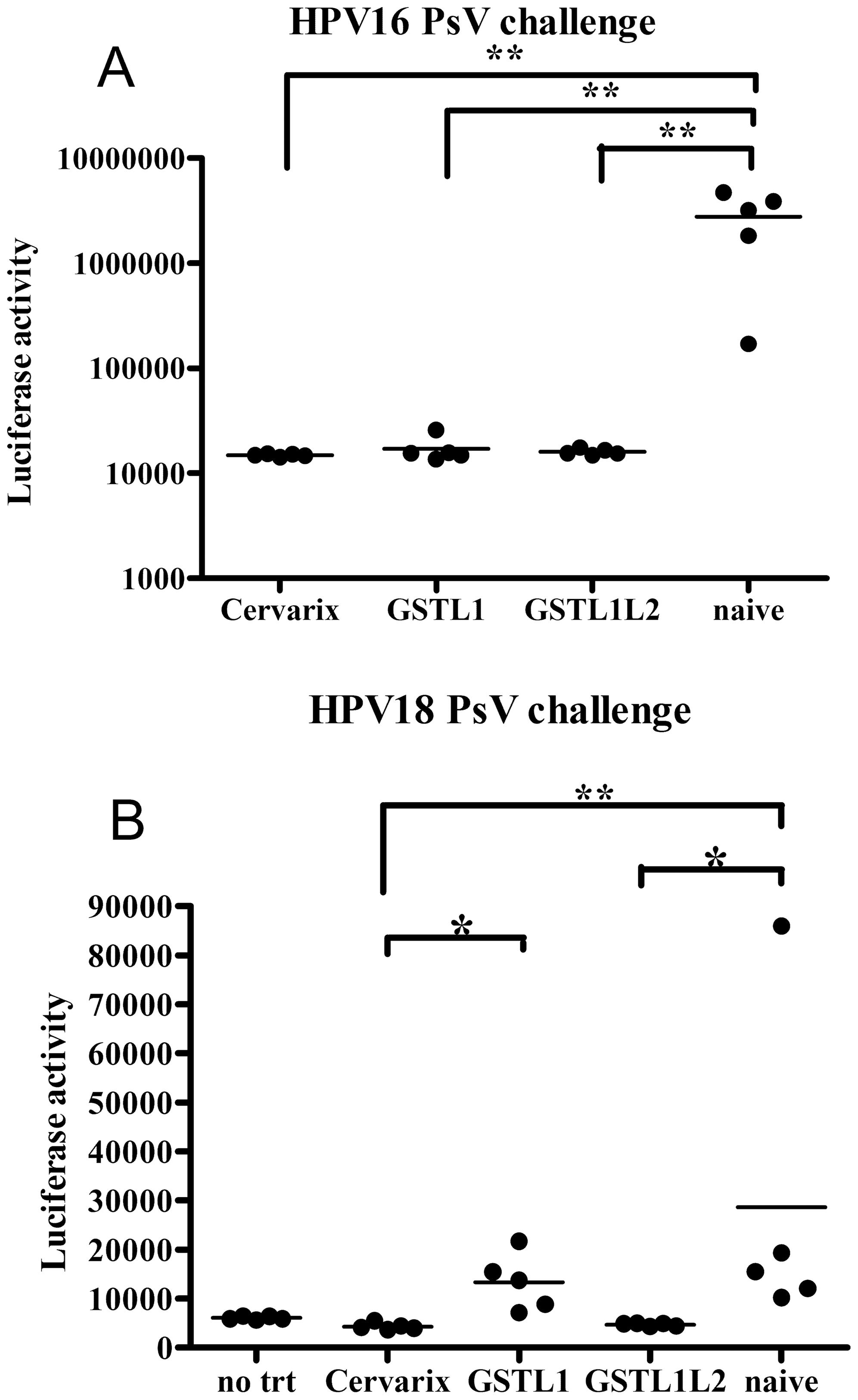 human papillomavirus and mice