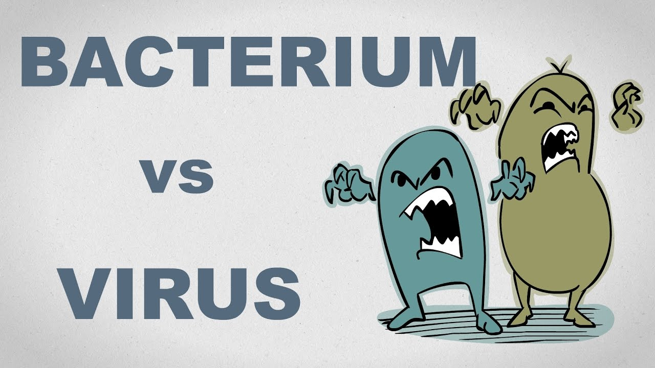 Virus vs. bacterie - diferența dintre o infecție virală și una bacteriană