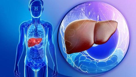 Paraziti s soda paraziti - Paraziti u krvi covjeka - Hpv virus i jetra