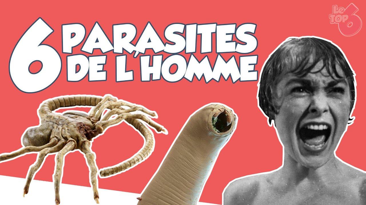 les parasites de l homme viermi umani specii umane