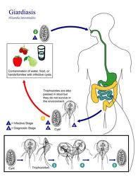 Produse de Farmaceutice > afectiuni digestive > antiparazitare Medikon