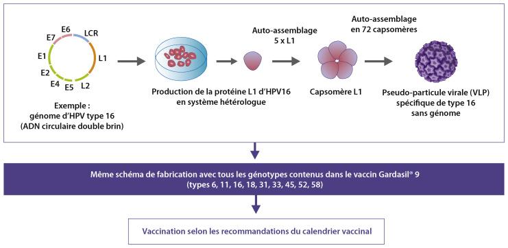 Papillomavirus avant grossesse