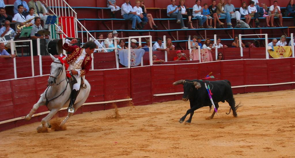 Iată cum se omoară un taur. - Forumul Softpedia
