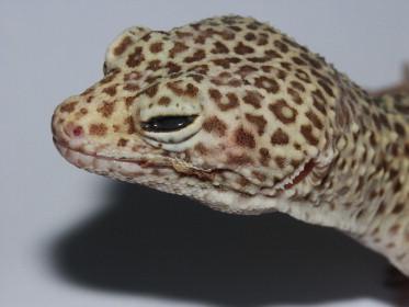 papillomas lizards rezultatul condilomului