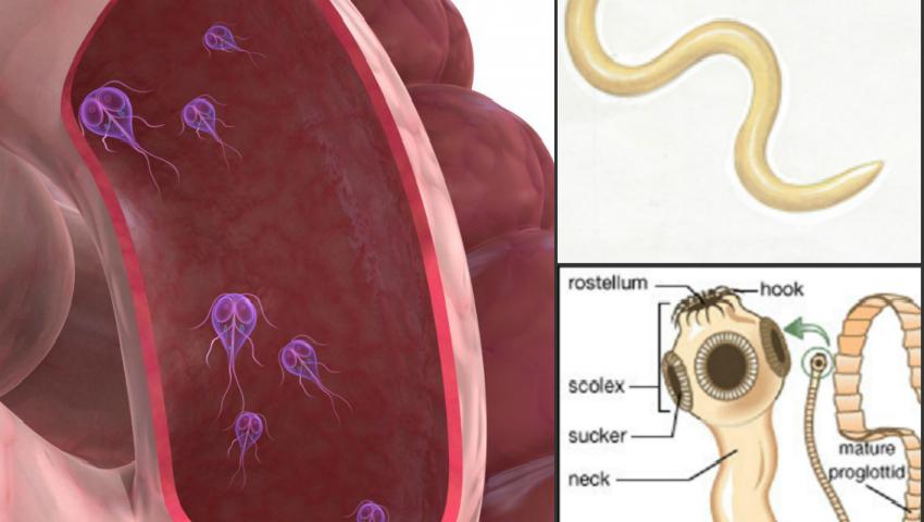 semne de helminti în tratamentul copiilor bacterii gheata kfc