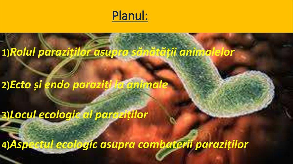 papillomavirus related diseases giardia vierme