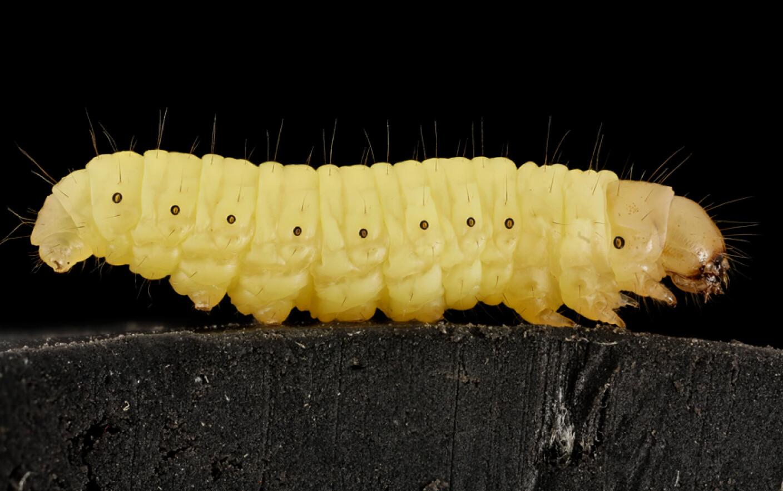 Viermi și medicamente pentru giardia, Cum poţi scăpa de viermii intestinali.