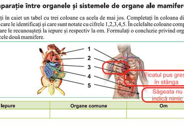 diagnosticul și tratamentul helmintelor)