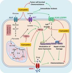 Hepatic cancer receptor,