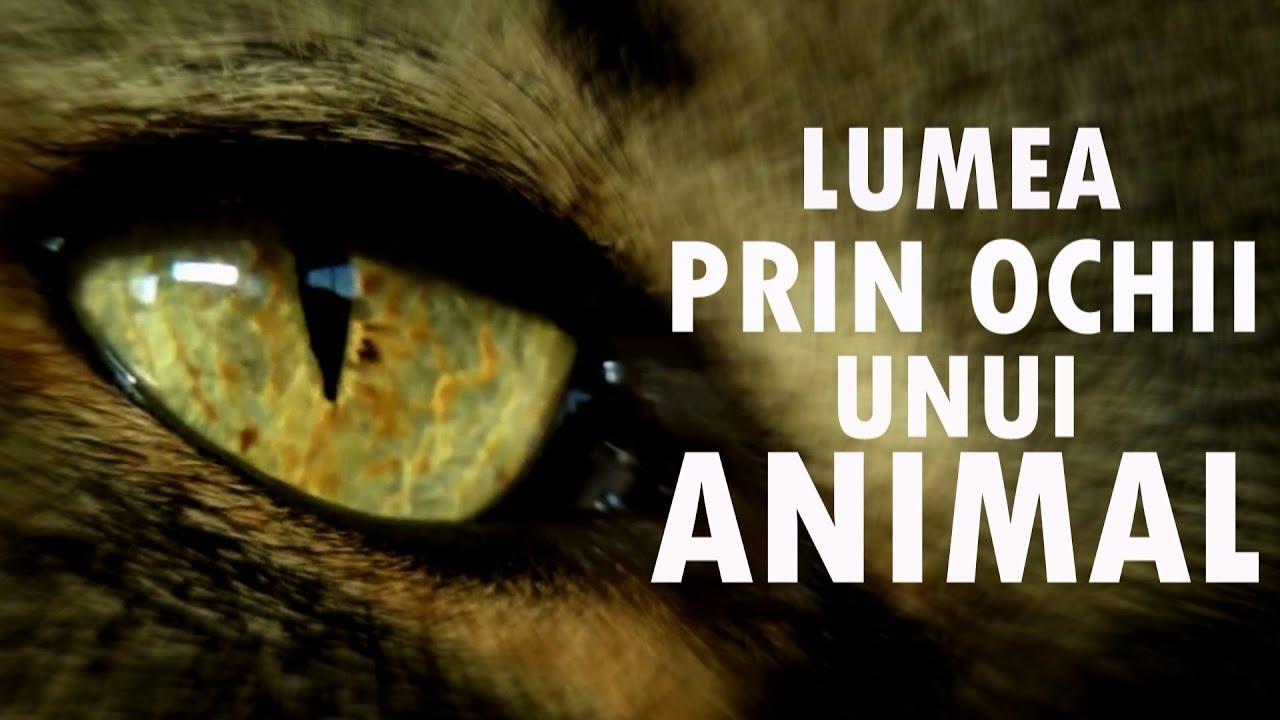 paraziți în tratamentul ochiului uman