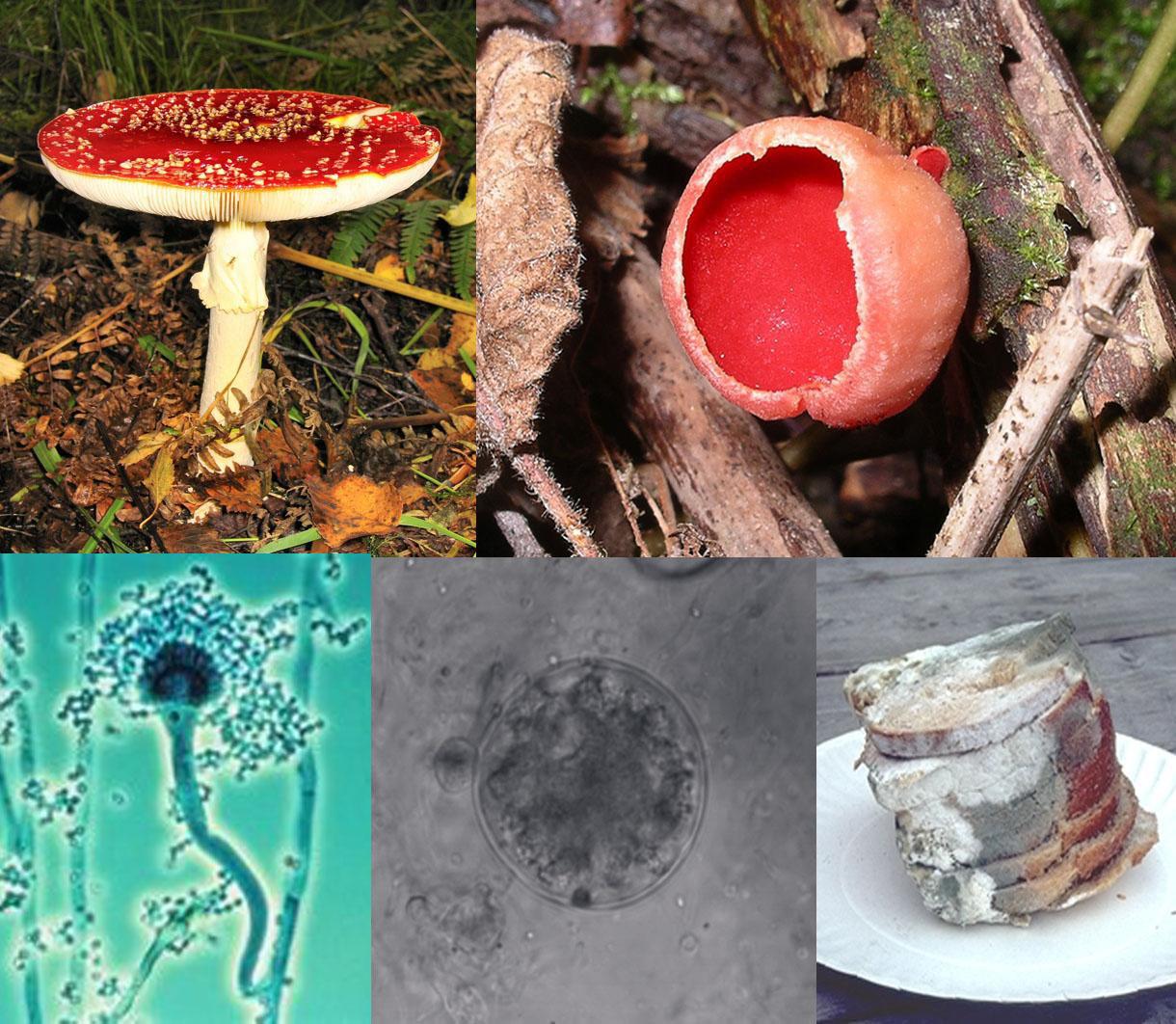 diferențele dintre saprofite și paraziți