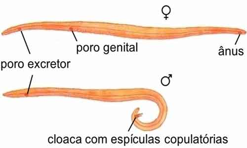 filo dos nemathelminthes gastric cancer emedicine