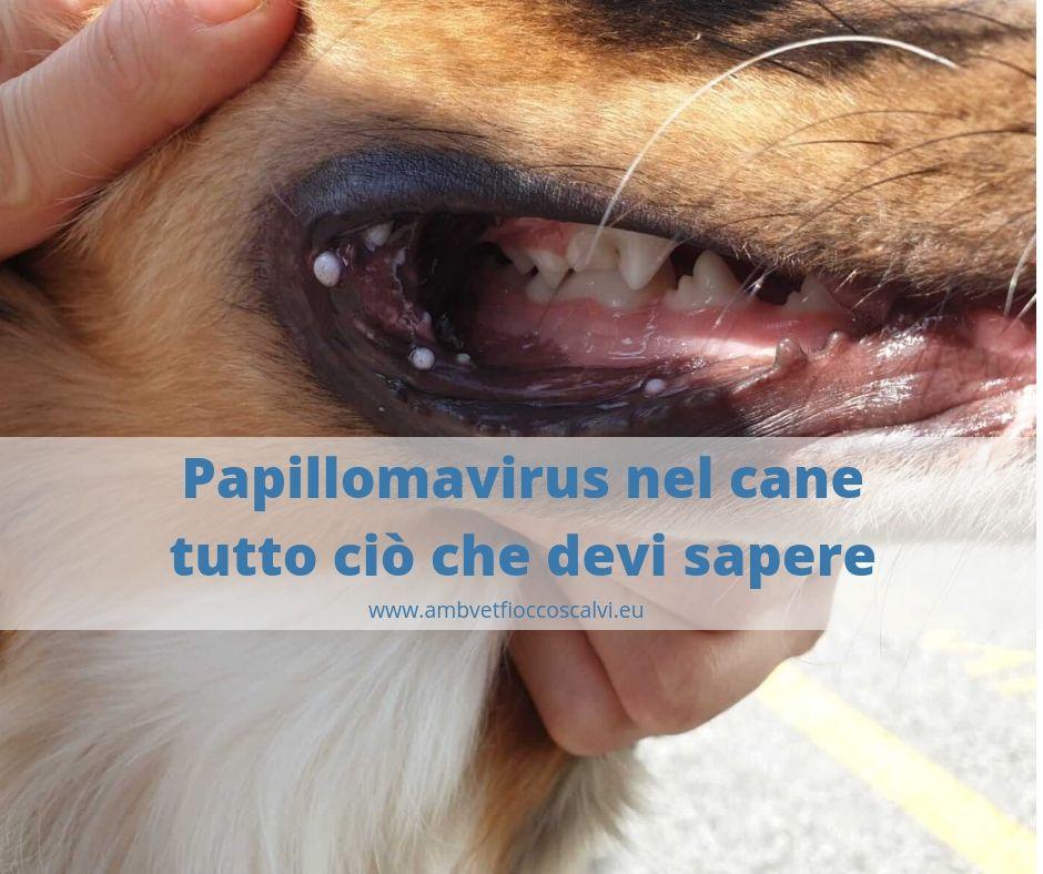 papilloma virus uomo tumore