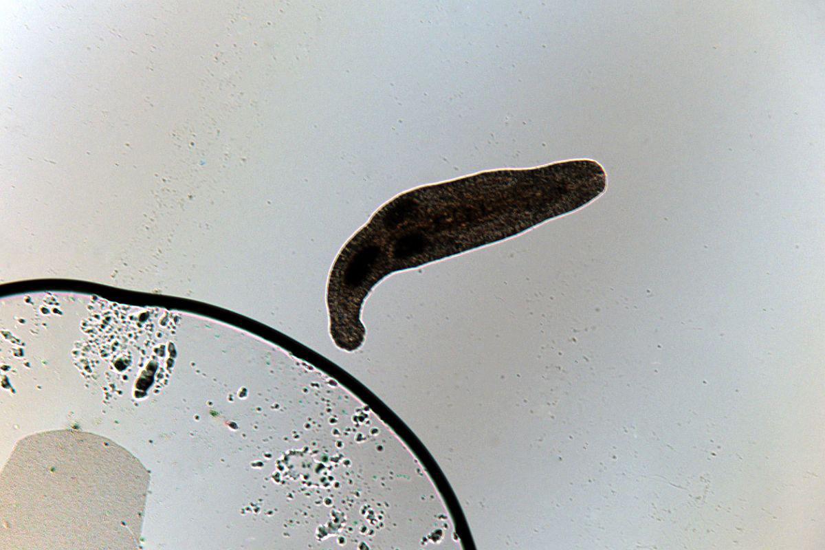 leac pentru viermi împotriva nematodelor pastile antihelmintice pentru oameni