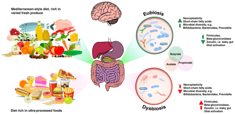 what does a dysbiosis mean