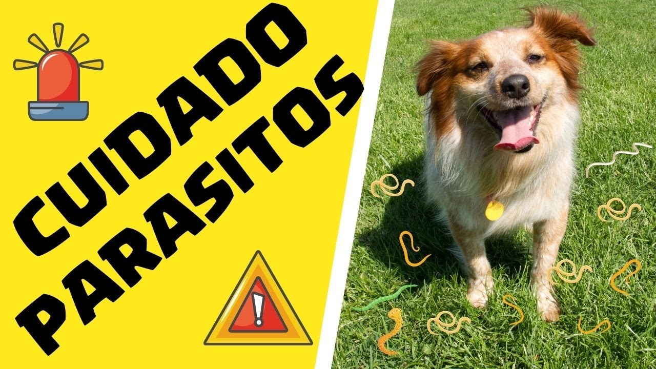 oxiuros en perros tratamiento