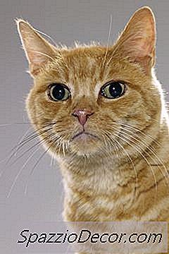 Giardia sintomas gatos