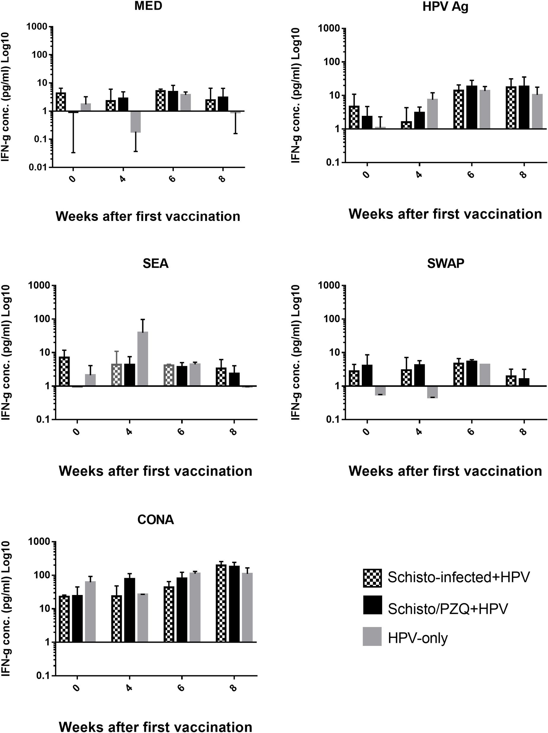 papillomavirus vaccin composition