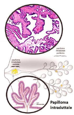 simetria nematodului toxine killer