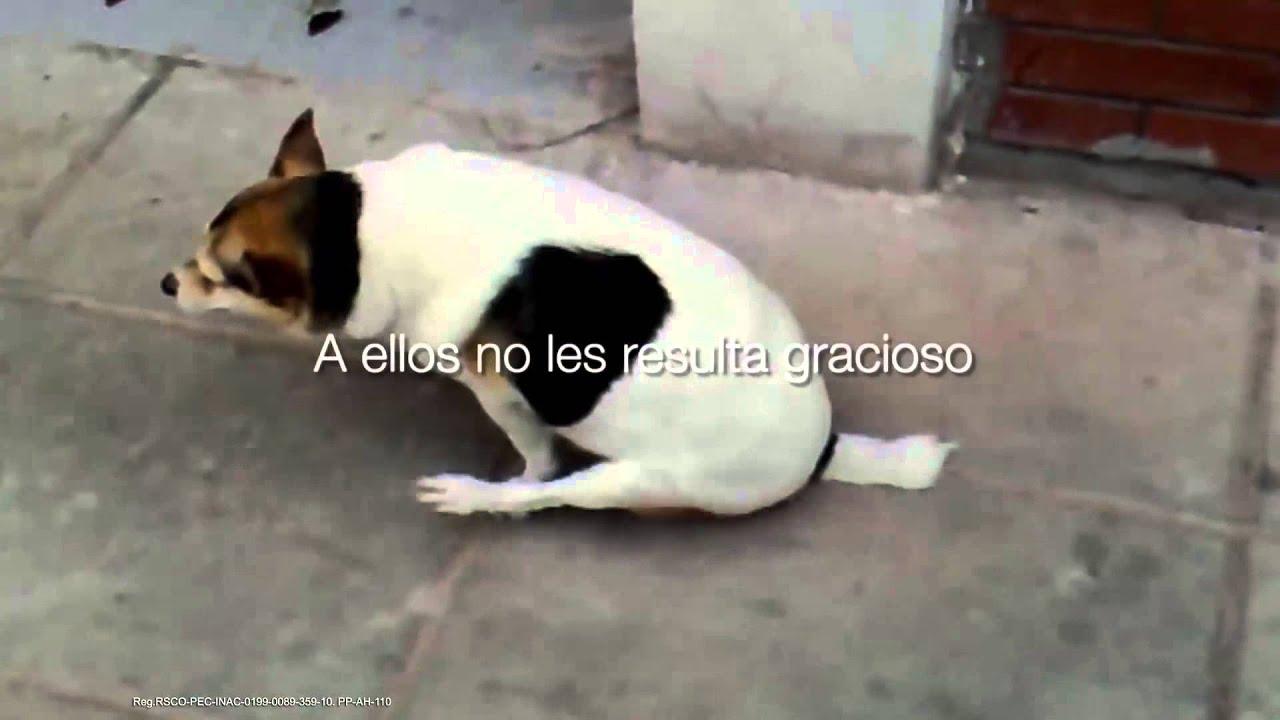 oxiuros perros