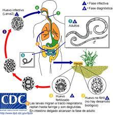 WORMEX SIROP*ML - Antihelminice - Aparatul digestiv - Farmacie