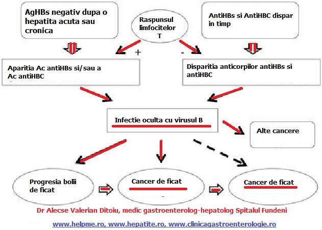 virusi hepatici b orsofereg forum