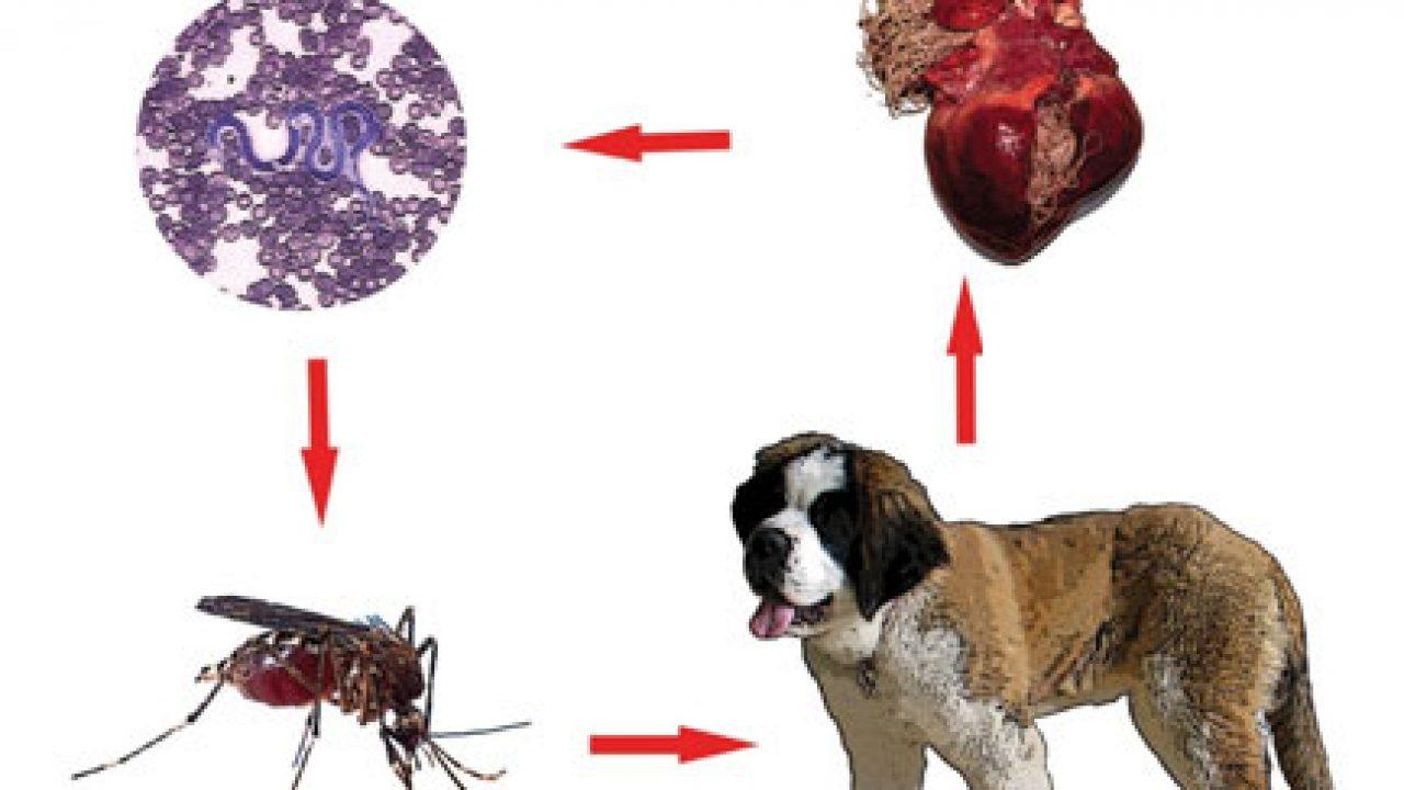 preparate împotriva nematozilor și viermilor