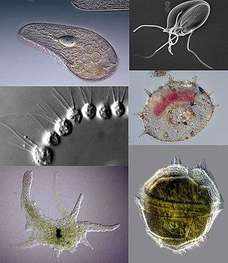 Organismele parazite produc - Account Options