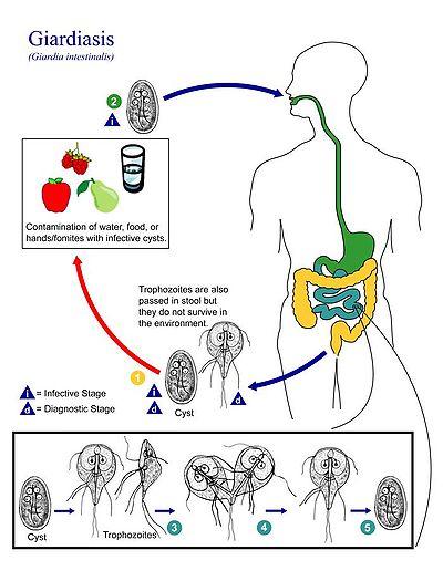 Cele mai populare pastile alimentare funcționează într-adevăr, bara principală