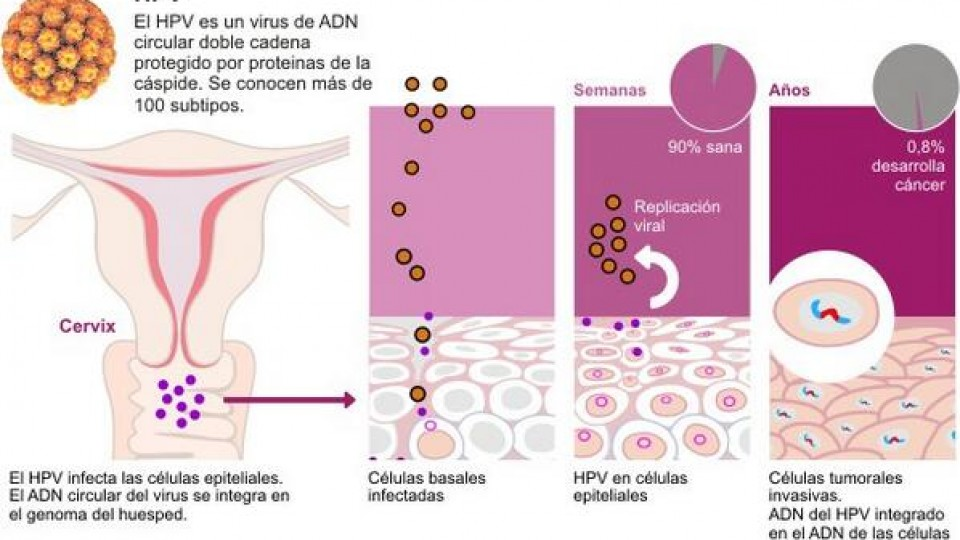 Is shingles and hpv virus
