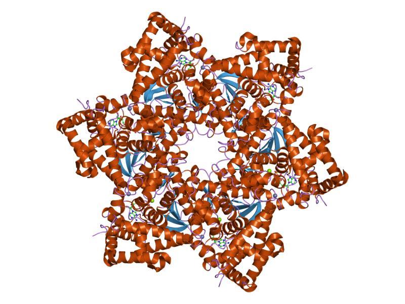 Codul european împotriva cancerului - Acasă, Virus del papiloma que e