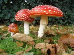 ciuperci halucinogene romania