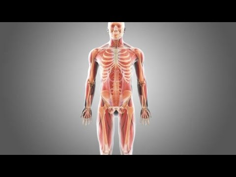 Viermi din mușchii umani