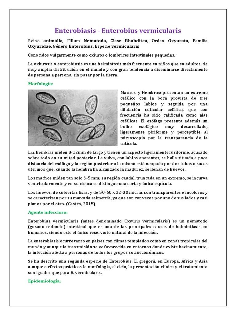 enterobius vermicularis reservorio