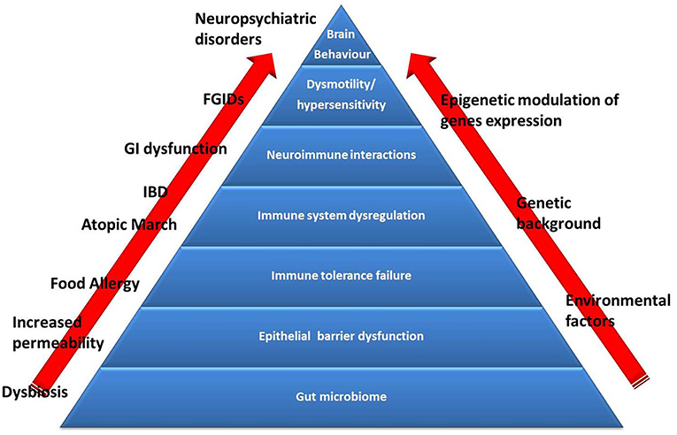 Dysbiosis medical definition. Dieta pentru tratamentul dysbiosis intestinale, Dysbiosis of the gut