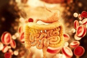 Reteta unui medic: cum sa-ti detoxifici colonul, ficatul si rinichii in doar 48 de ore
