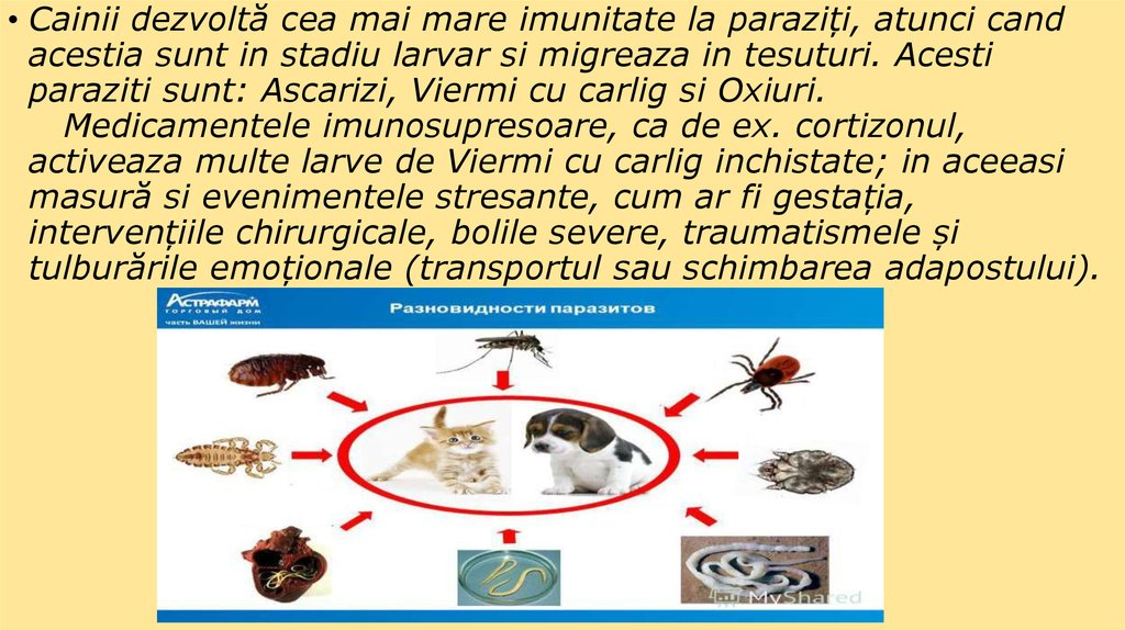 Parazitozele intestinale la copii