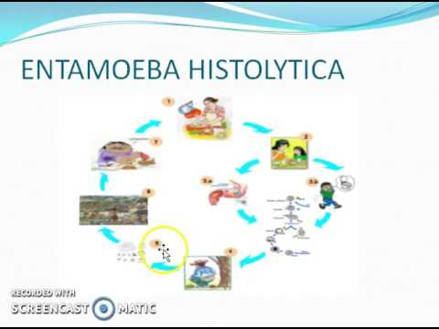 ciclo biologico de los oxiuros que es el papiloma virus sintomas