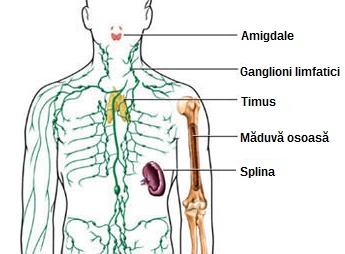 Limfom / Cancer limfatic - Tot ce trebuie să ştii | Cancer
