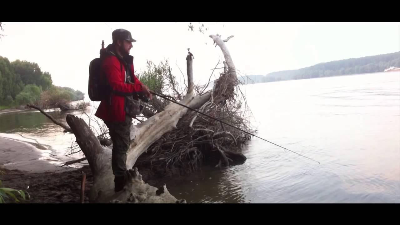 Șalăul din Dunăre are viermi