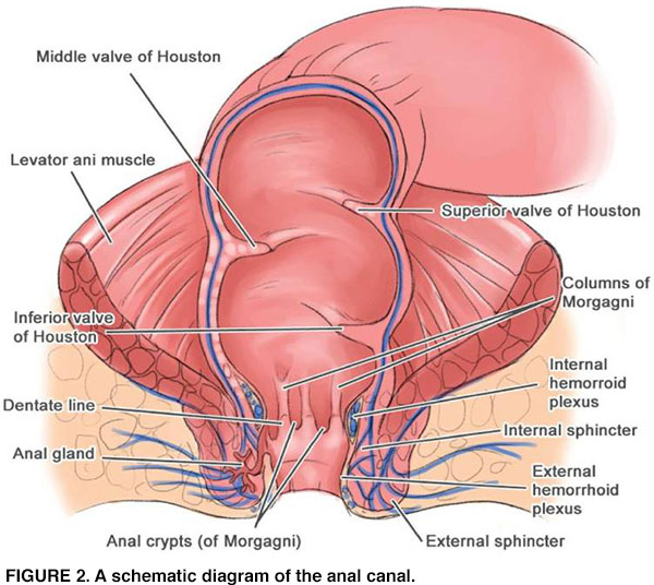 Hpv anorectal cancer
