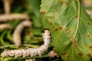 paraziti malofage parasites du maurier review