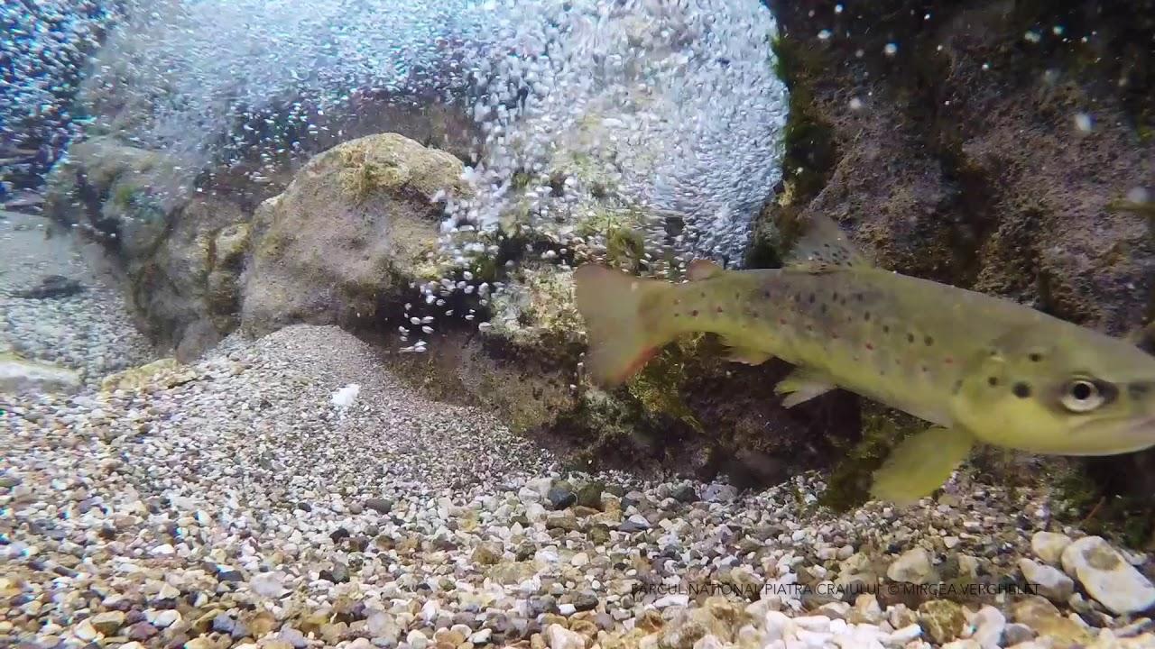 vierme lungime cm alb viermi pentru pescuit