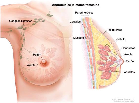Cancer de prostata operacion consecuencias. Oxiuros causas y consecuencias