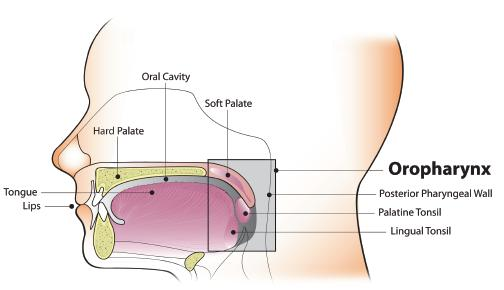 hpv related oropharyngeal cancer